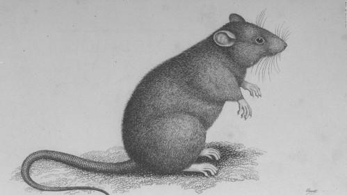 150225145949-aman-rat-full-169